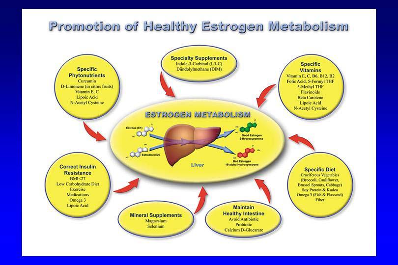 Fake Estrogen A Modern Health Epidemic Gestalt Reality