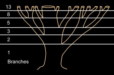 fibonacci branches numbers tree