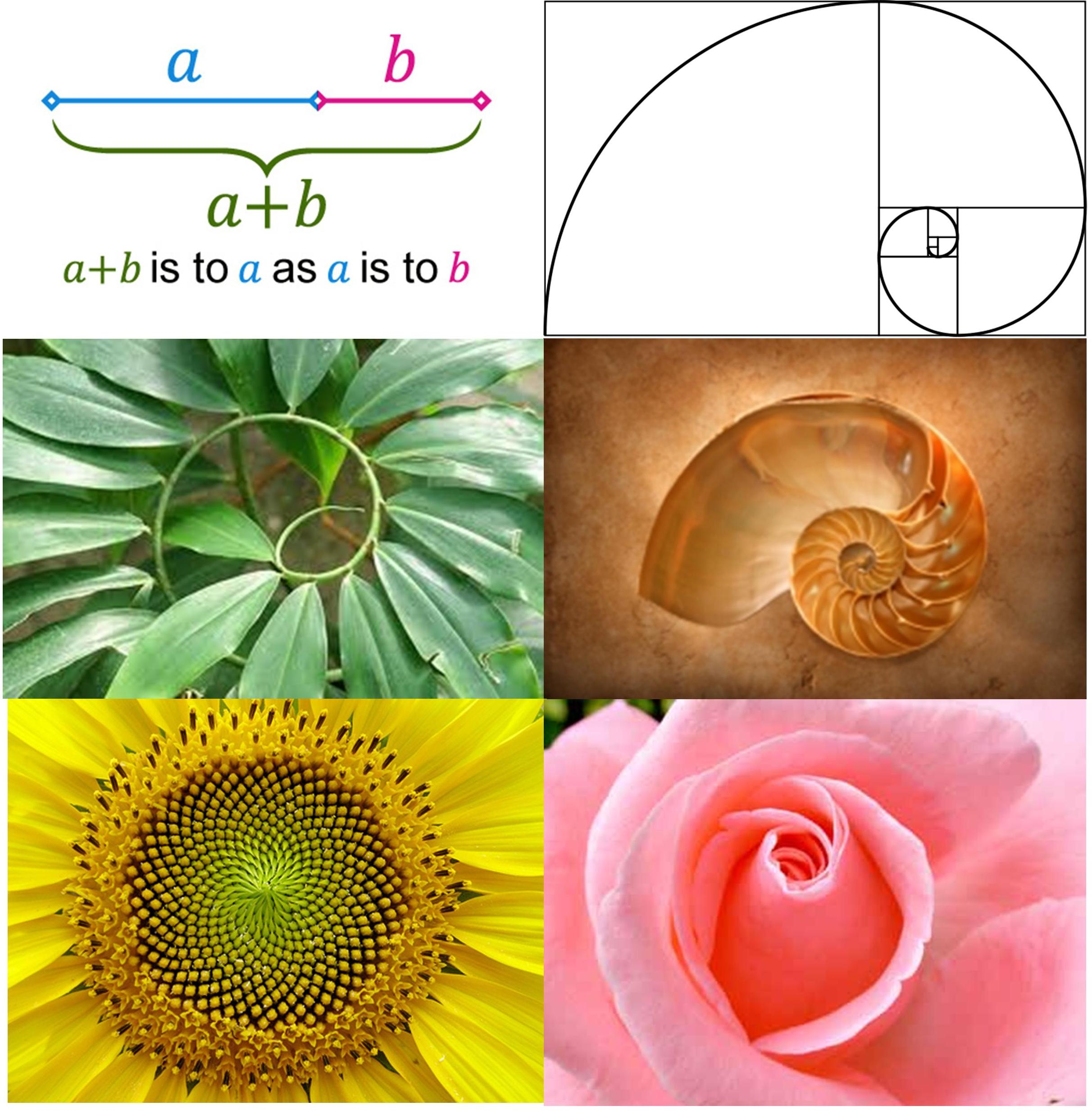 In the spirit of making fly-fishing complicated - Fibonacci ...
