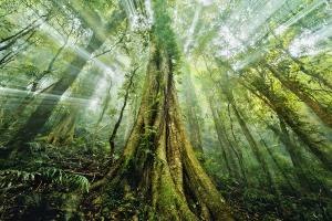Mystic Jungle By Drew Hopper