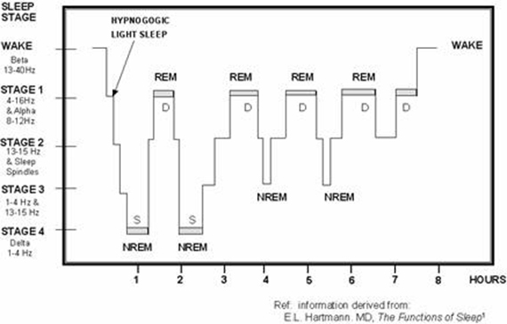 sleep cycle stages delta REM