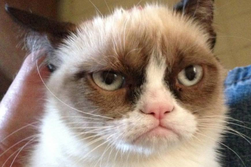 grumpy-cat-writers-photo-u1