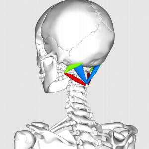 Suboccipital_triangle11